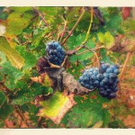 Grapes-in-Provence